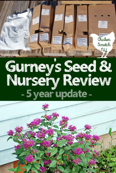 gurney's plant review, magenta bee balm, boxes of plants delivered by mail