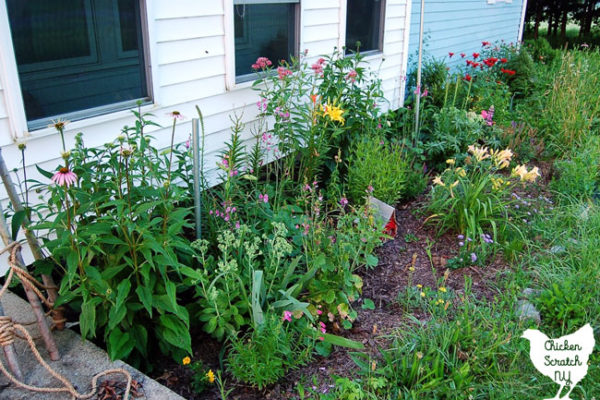 flower garden with red bee balm, purple coneflowers