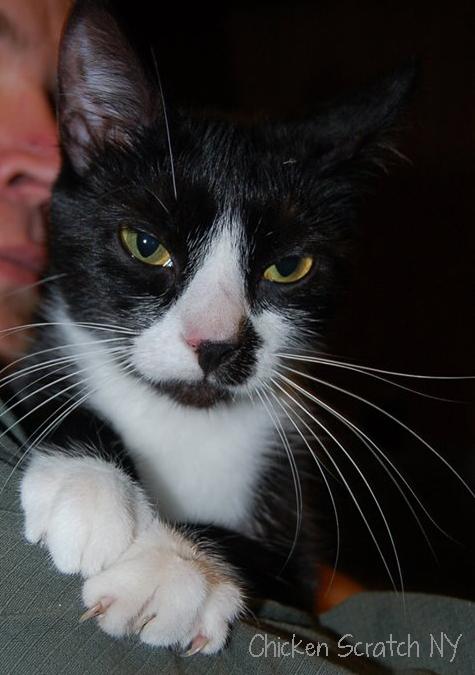PK Kitty