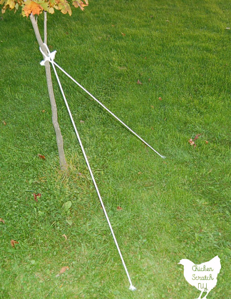 clothesline tied to a tree to start a spider web halloween decoration