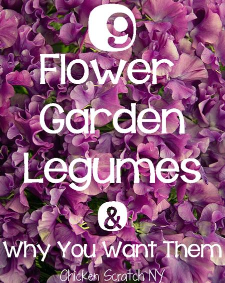 9 Flower Garden Legumes