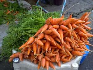 Carrots - Last Minute Garden Crops