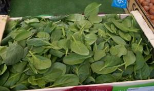 Spinach - Last Minute Garden Crops