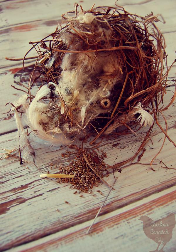 Goldfinch Bird Nest Found In An Overgrown Asparagus Bed