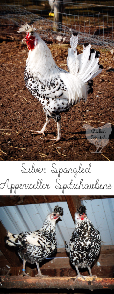 Everything you never knew you wanted to know about the Appenzeller Spitzhauben