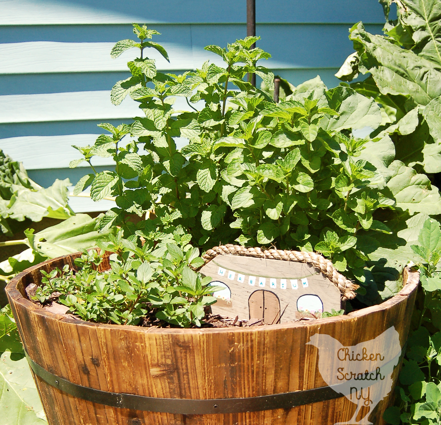 Create a DIY Whiskey Barrel Mint Garden in less than an hour and learn why you should never plant mint directly in the ground