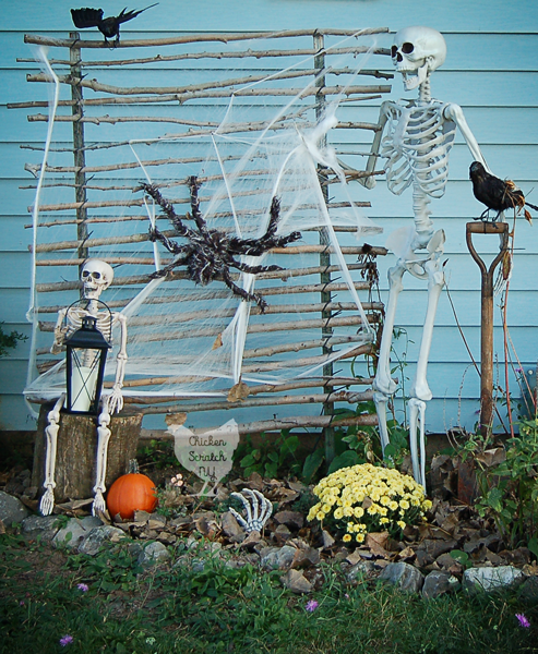 spooky Halloween skeleton display made with two fake human skeletons, mums, pumpkins and various Halloween decorations in a garden bed