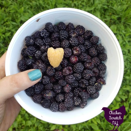 large heart shaped fall gold raspberry in white bowl with black raspberries