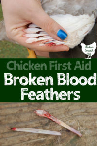 pulled blood feathers broken wing feathers