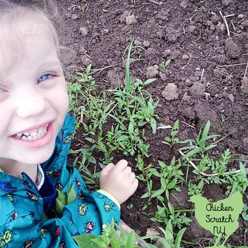 little girl in vegetable garden with frog