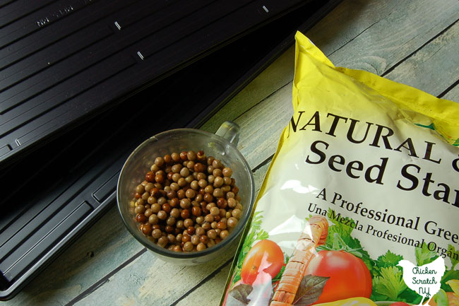 black seed starting trays, seed starting mix and a clear cup full of soaked pea seeds