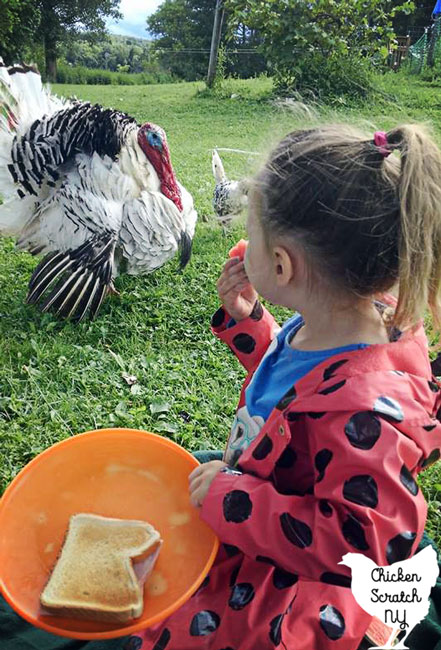 royal palm turkey behind little girl in ladybug raincoat holding orange plate with ham sandwich
