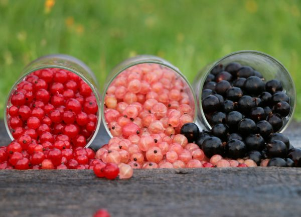 red pink and black currants