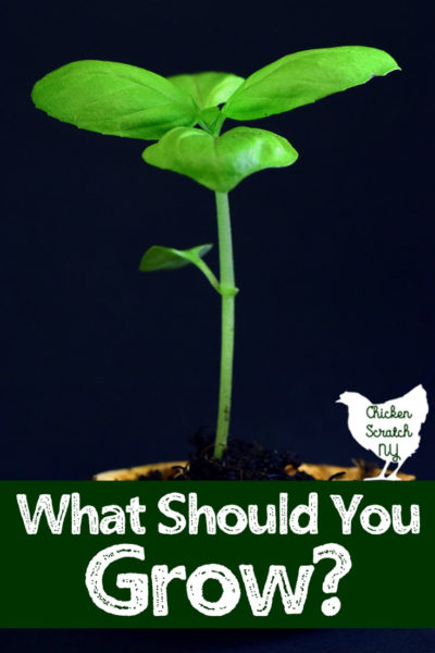 basil seedling with what to grow text overlay