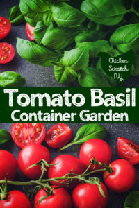 tomatoes and basil plants