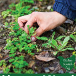 how to weed your garden hand pulling weeds