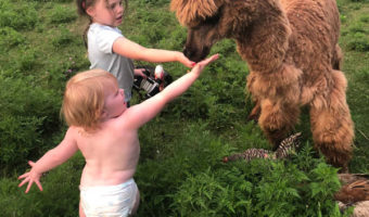 two little girls in a green field feeding a brown alpaca