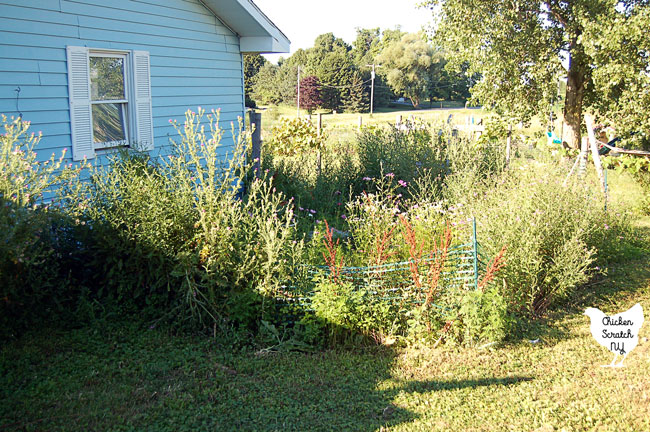 overgrown garden with green plastic temporary fencing strangled by weeds