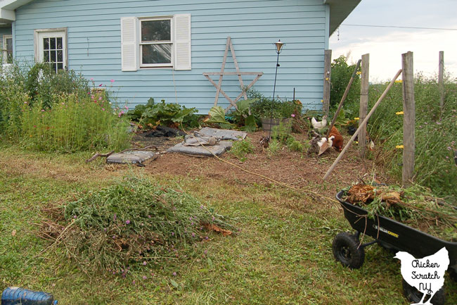 semi cleaned out garden bed with large pile of weeds in the front left and a wagon filled with small weeds and roots in the right front