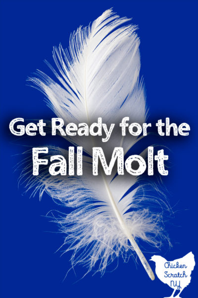 white feather on blue background eith text overlay get ready for the fall molt
