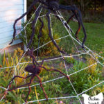 spider web made from clothesline with two large spiders in a late summer garden in front of a blue house