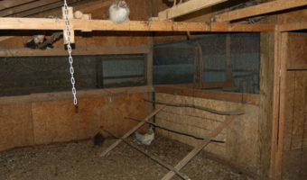 folding chicken roost in chicken coop