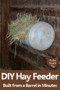 hay feeder made from a barrel