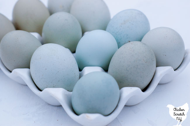 blue, green and pale olive eggs in a white ceramic egg holder