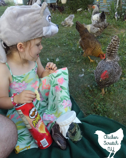 dominique chicken at a picnic with a little girl in a floral dress eating chips