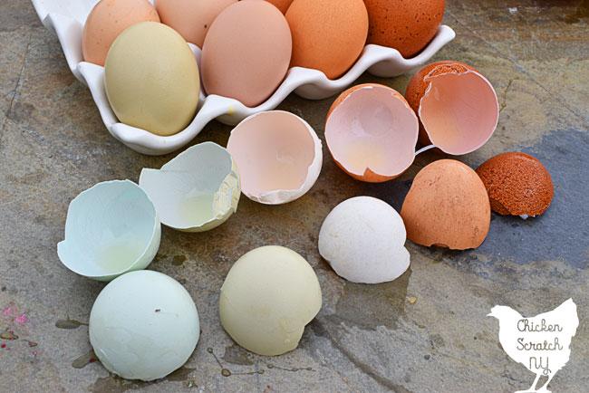 inside broken egg shell colors
