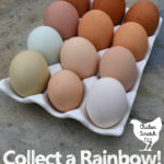 white ceramic egg holder filled with 12 fresh farm eggs in blue, green, tan, cream, white & dark brown