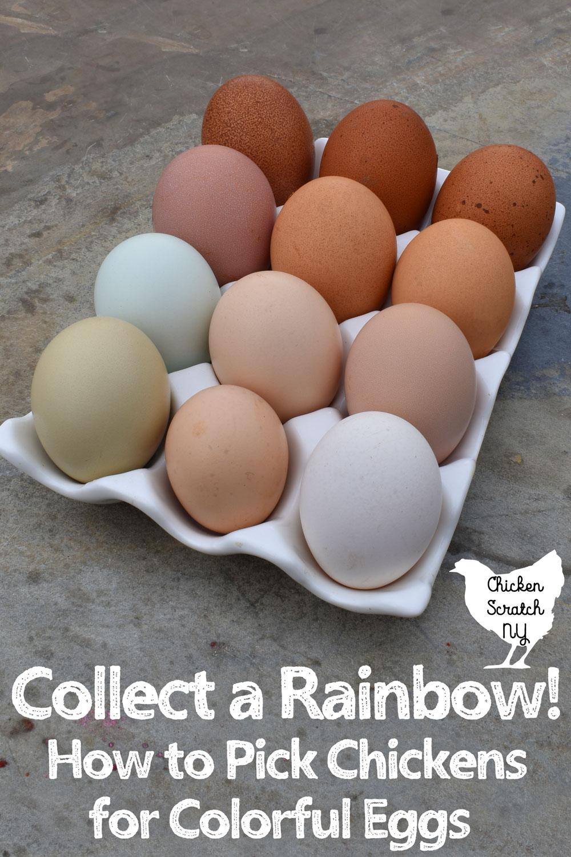 white ceramic egg holder filled with 12 fresh farm eggs in blue, green, tan, cream, white & dark brown
