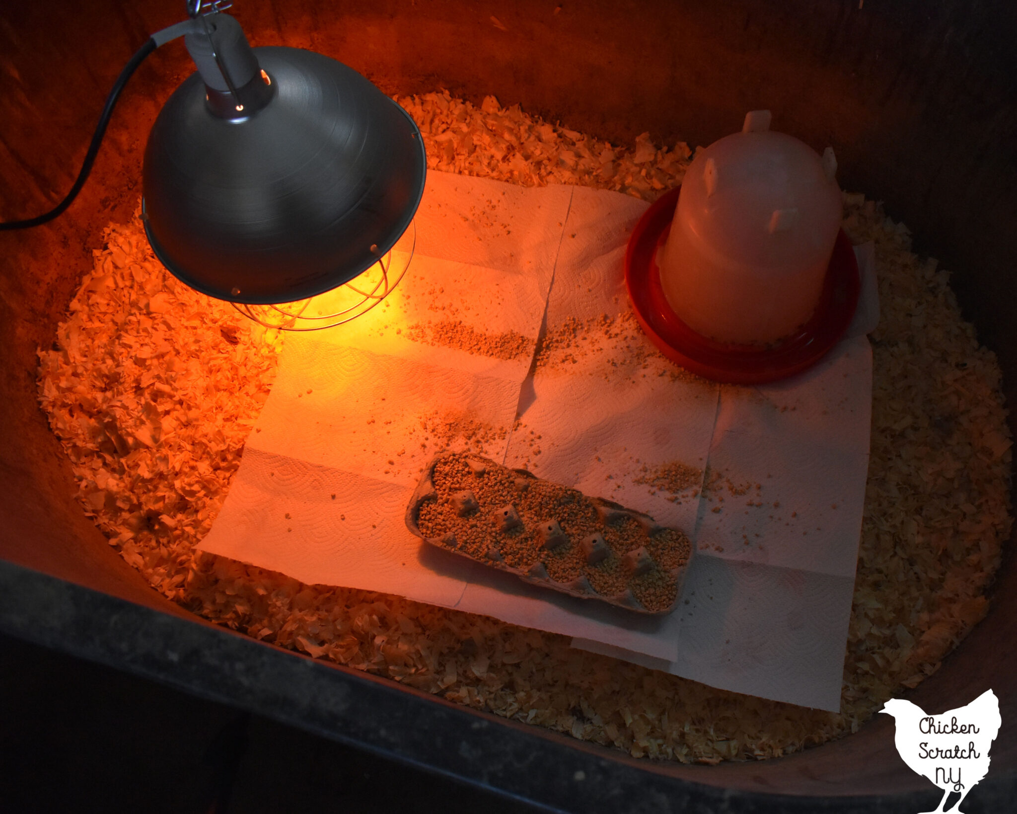 chick brooder set up with heat lamp, waterer and food tray