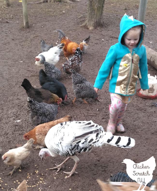little girl walking through flock of chickens and a turkey hen