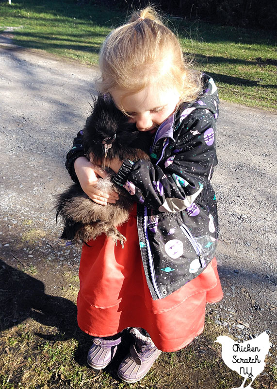 small blonde girl hugging small black silkie rooster