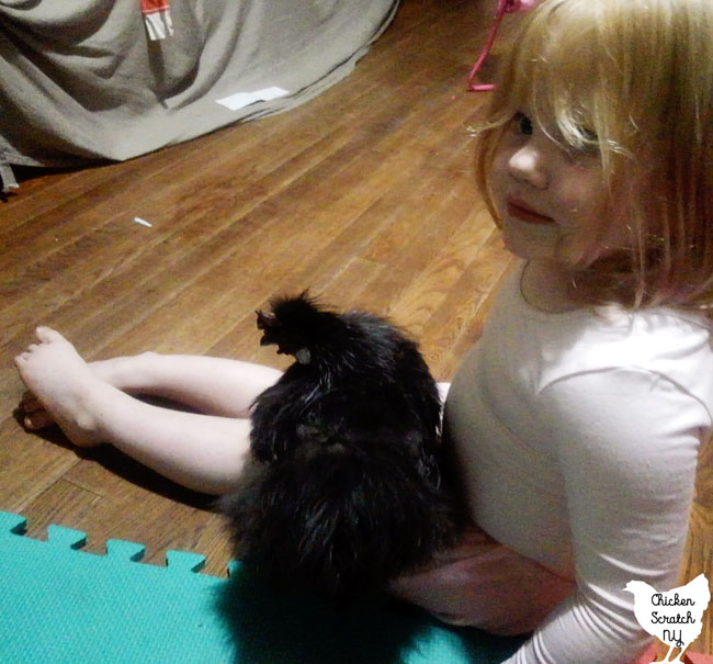 little blonde girl with a small black silkie rooster on her lap
