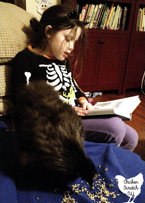lyoung girl reading a book with a black silkie rooster eating snacks on a blue blanket