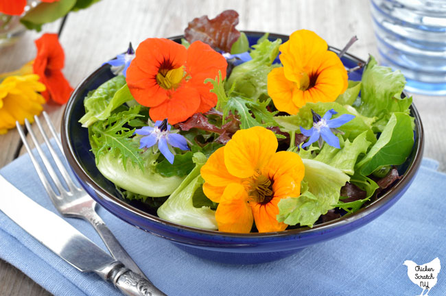 salad bowl filled with greens and edible flowers nasturtiums and borage