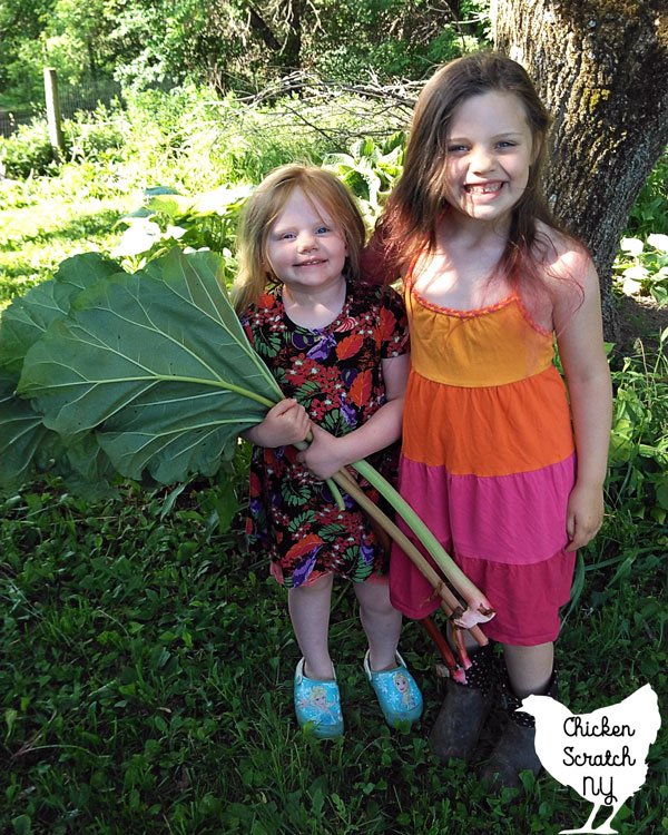 two young girls holding large rhubarb stalks with leaves