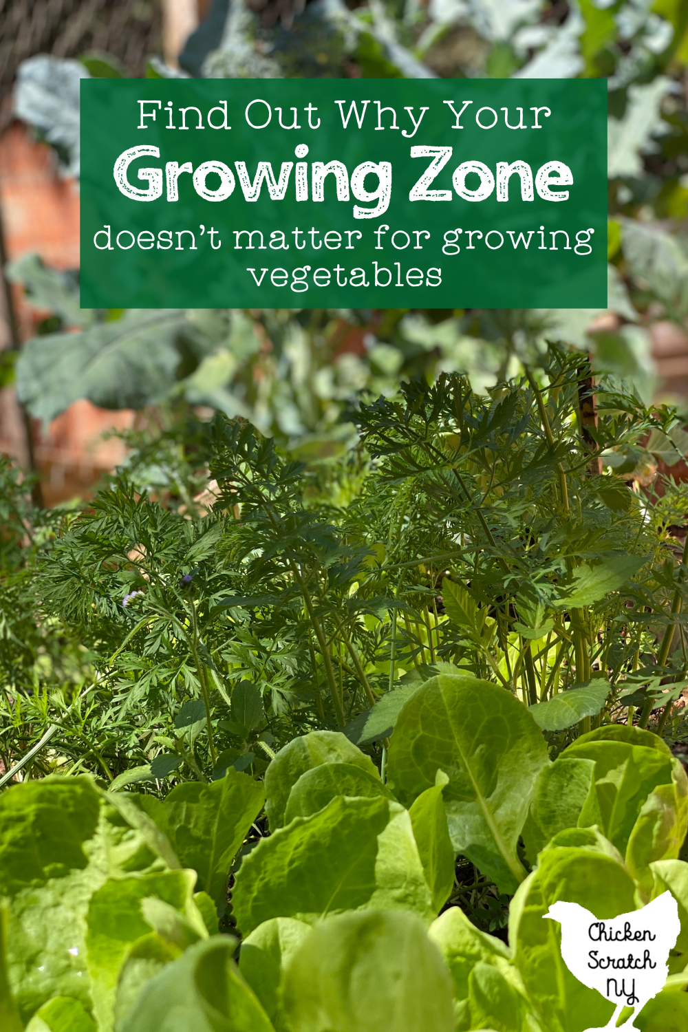 """close up image of a vegetable garden showing carrot tops and spinach with text overlay """"find out why your growing zone doesn't matter for growing vegetables"""""""