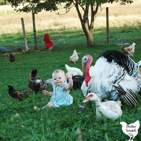 small child sitting on the ground surrounded by chickens, ducks and a turkey