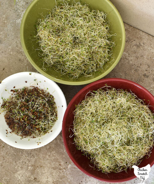 two bowls filled with fresh sprouts and another smaller bowl filled with scooped out seed hulls