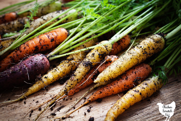 pile of heirloom carrots with soil on them