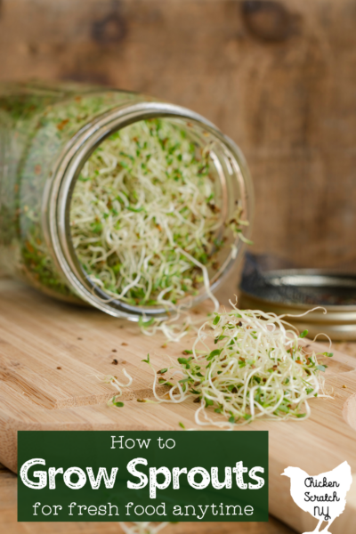 """tipped over mason jar filled with green alfalfa sprouts, sprouts spilling onto a wooden cutting board with text overlay """"how to grow sprouts for fresh food anytime"""""""