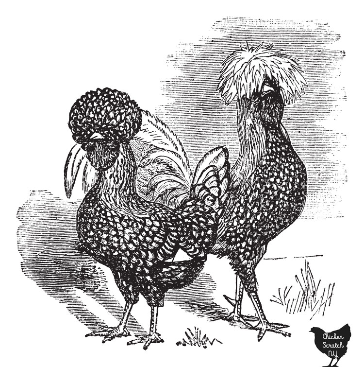 wood cut image of one polish hen and one polish rooster